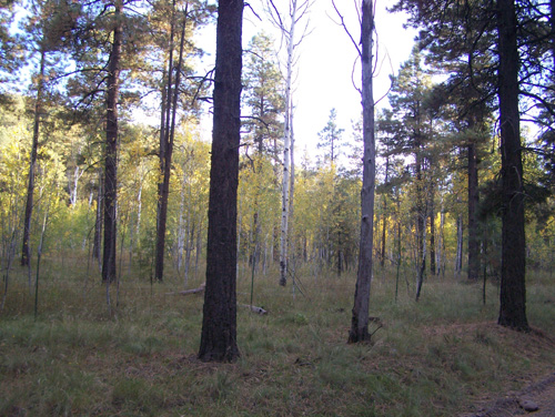 forest-20121004 015