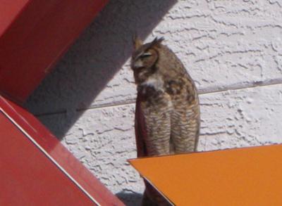 bhc-owl-20130409-02