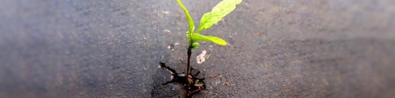 A young plant growing out of a crack in the asphalt.