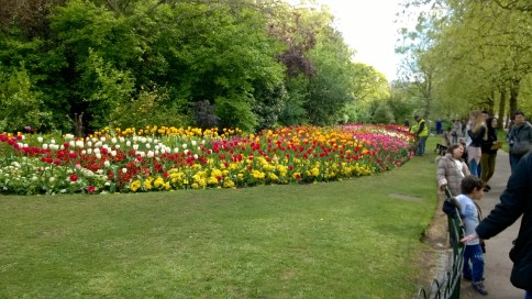 flowers in St James Park