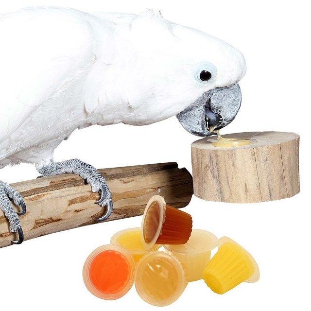 Image result for cockatoo eating fruit
