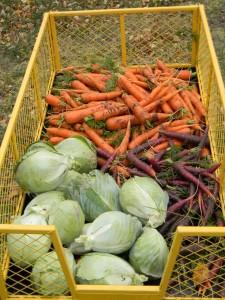 Alaskan harvest