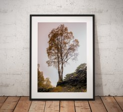 Lake District Landscape Photography, Autumn tree, Hodge close, Cumbria, England. Landscape Photo. Mounted print. Wall Art.
