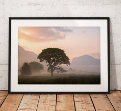 Lake District Landscape Photography showing a very atmospheric misty tree during a sunrise at Crummock water with haystacks mountain. UK