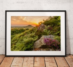 Landscape photography print Roseberry Topping Sunset glow  Heather wild flower North York Moors English countryside mounted fine art print