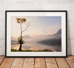 Landscape Photography showing a misty sunrise over a lone tree on Buttermere lake with Haystacks mountain. Lake District. United Kingdom