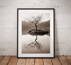 Lone Tree Landscape Photography taken on a misty morning at Rydal Lake District, England. Wall Art