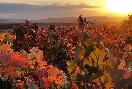 Spanish Wine and Tapas