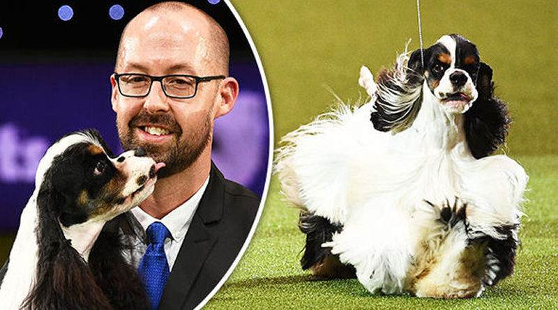Sh Ch Afterglow Miami Ink Crufts Best in Show Winner 2017