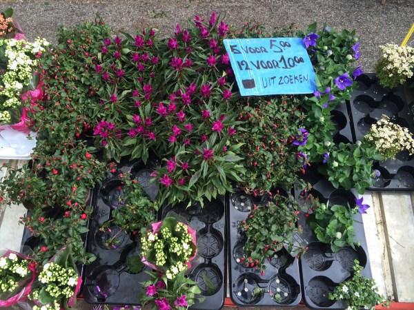 planten rommelmarkt bakkeveen