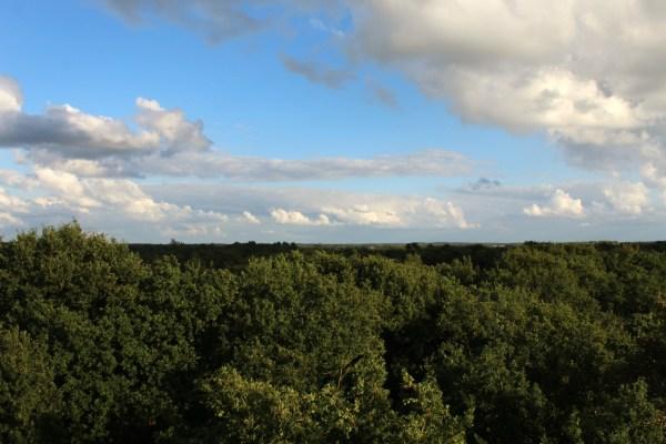bakkeveen_uitzicht_uitkijktoren
