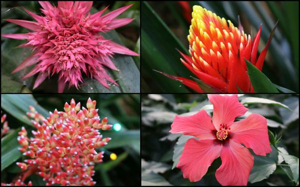 collage_bloemen