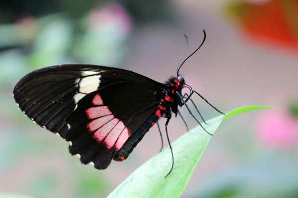 orchideeen_hoeve_luttelgeest_rood_vlinder