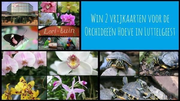 prijsvraag winactie vrijkaarten orchideeen hoeve luttelgeest