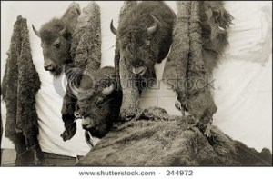 fur buffalo