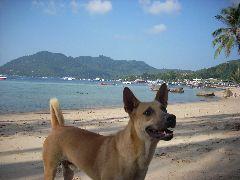Ko Tao beach