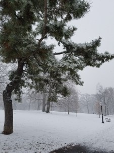 winter tree and bench