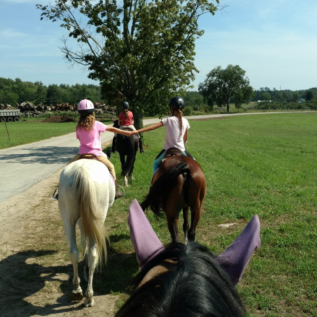 Youth 4 H Riding Classes Learn To Horseback Ride On Safe Horses Amp Poniesnorthroadfarm