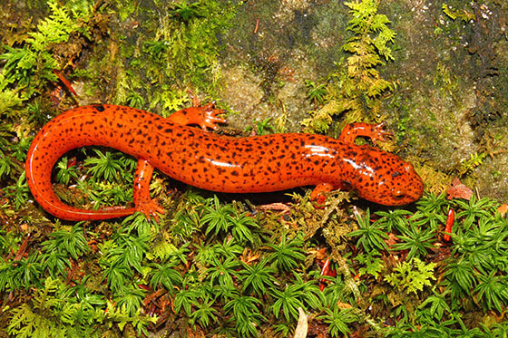 https://i1.wp.com/www.northshoredailypost.com/wp-content/uploads/2019/07/Biodiversity-UBC.jpg?fit=560%2C373&ssl=1