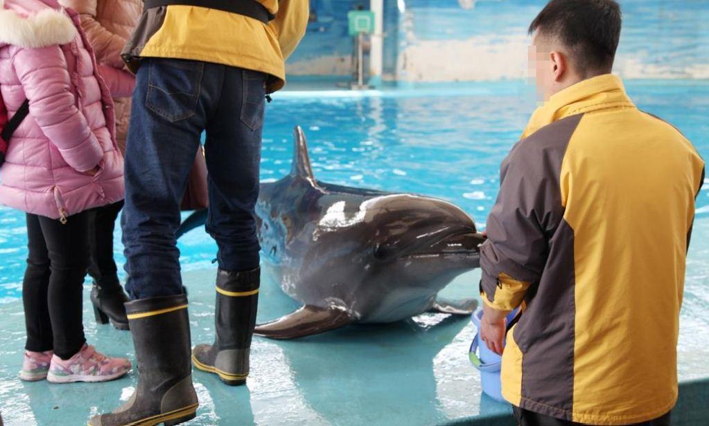 https://i1.wp.com/www.northshoredailypost.com/wp-content/uploads/2019/10/Dolphin-shows-cruelty.jpg?fit=1023%2C616&ssl=1