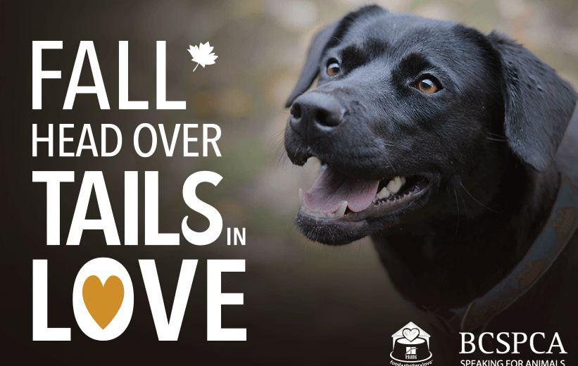 https://i1.wp.com/www.northshoredailypost.com/wp-content/uploads/2019/11/SPCA-campaign.jpg?fit=821%2C520&ssl=1
