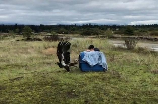 https://i1.wp.com/www.northshoredailypost.com/wp-content/uploads/2019/11/eagle-rescue.jpg?fit=626%2C412&ssl=1