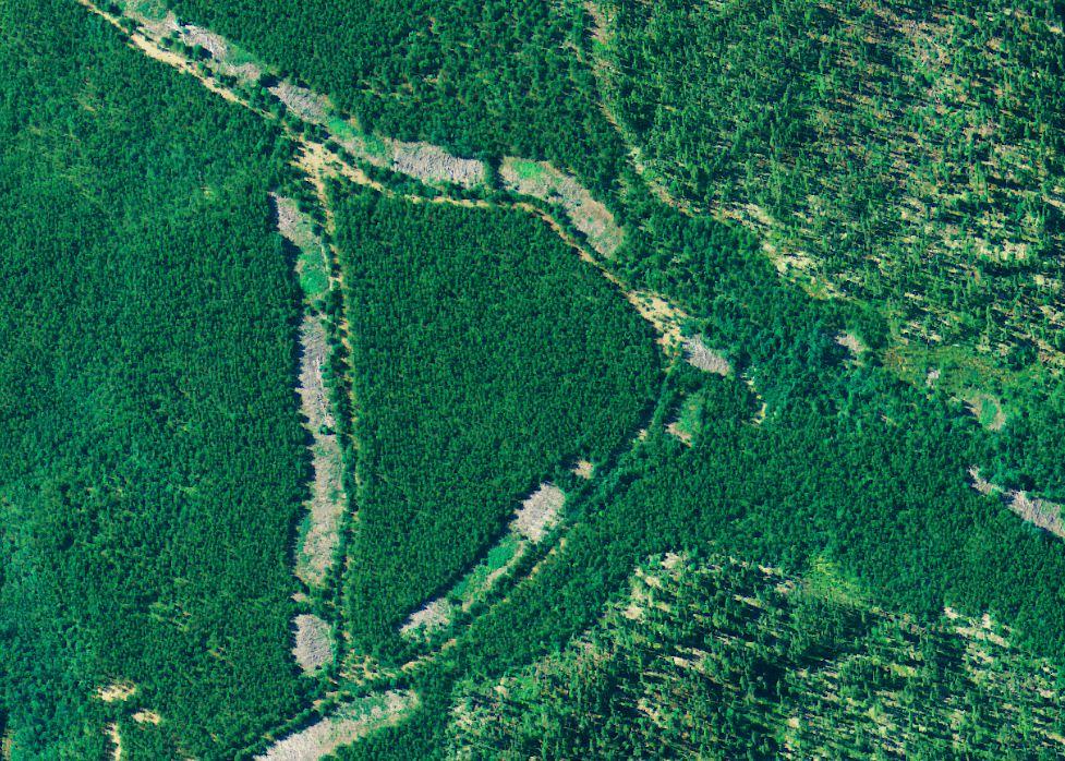 https://i1.wp.com/www.northshoredailypost.com/wp-content/uploads/2019/12/deforestation.jpg?fit=977%2C698&ssl=1