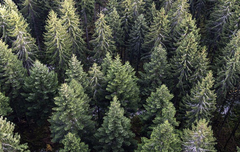 https://i1.wp.com/www.northshoredailypost.com/wp-content/uploads/2019/12/trees.jpg?fit=944%2C596&ssl=1