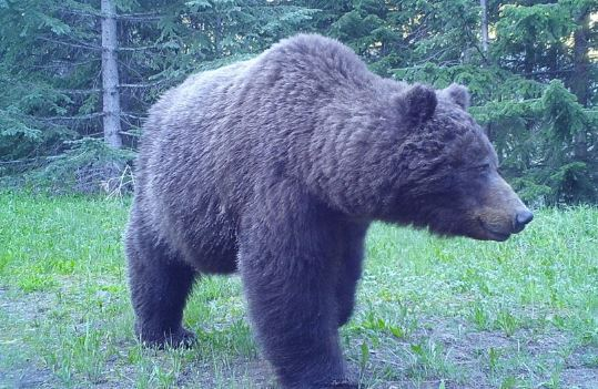 https://i1.wp.com/www.northshoredailypost.com/wp-content/uploads/2020/09/bear-wildlife.jpg?fit=539%2C351&ssl=1