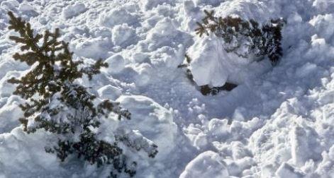 https://i1.wp.com/www.northshoredailypost.com/wp-content/uploads/2020/12/avalanche.jpg?fit=471%2C252&ssl=1