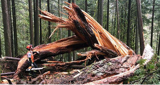 https://i1.wp.com/www.northshoredailypost.com/wp-content/uploads/2021/02/capilano-trees.jpg?fit=610%2C327&ssl=1
