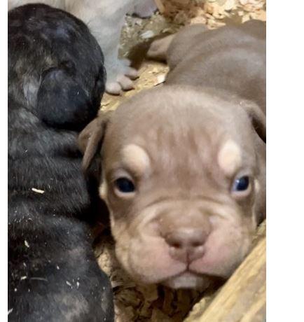 https://i1.wp.com/www.northshoredailypost.com/wp-content/uploads/2021/04/puppy.jpg?fit=434%2C460&ssl=1