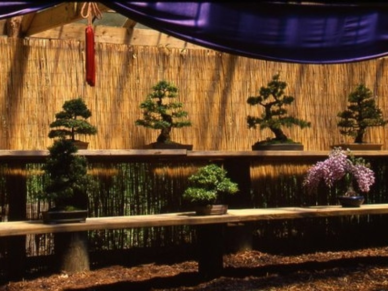 Humes Stroll Garden – The Principles of Ichebana Demonstration