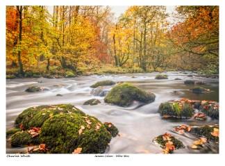 Autumn Colours - White Moss
