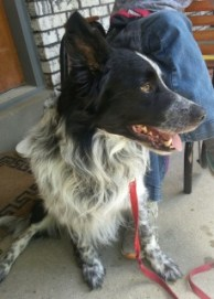Dakota looking for a new family to love him.