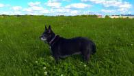 Lady is a pug-mixed wonderful sweetheart!