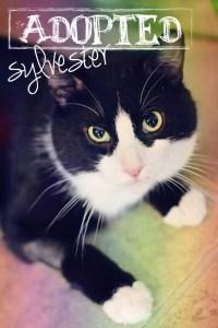 Sylvester1