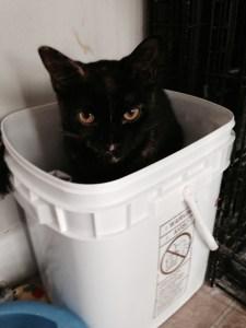 cat fraternity lady