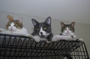 Diesel and his buddies watch from above wondering why the usual socialization doesn't take place