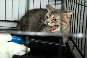 """Meet Ma Barker, who introduced me to the world of scaredy- cats (notice that I didn't say """"feral"""")."""