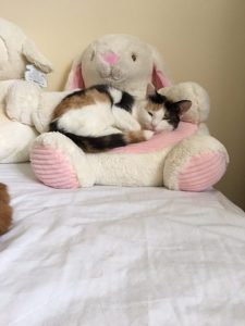 Jasmine in her day bed