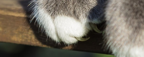 The Downside of Declawing Cats