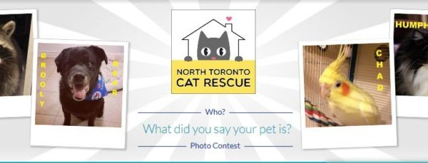 The North Toronto Cat Rescue's 3rd GoGo Photo Contest HAS BEGUN!!!