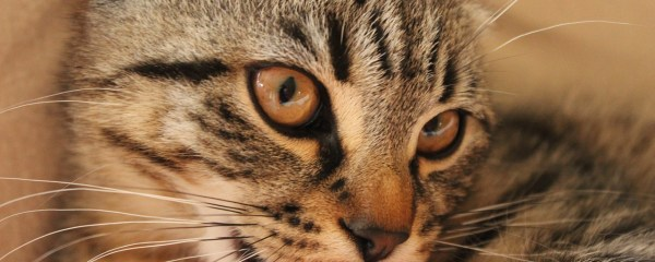 Cat Bites CAN Be Dangerous