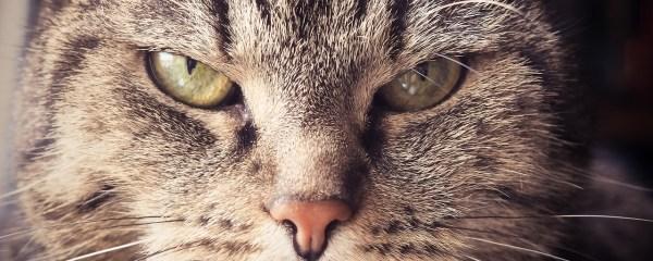 Pussycats' Pet Peeves