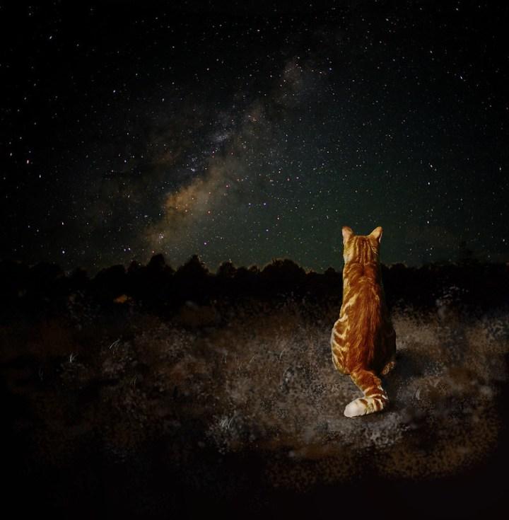 cats under teh stars