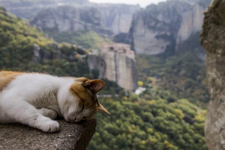 Cat, High