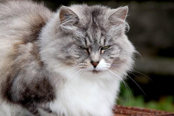 Stray, Cat