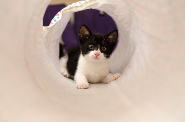 domestic-cat-4969989_1280