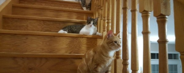Cody, Tully and brother Macabee